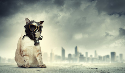 Cat in gas mask