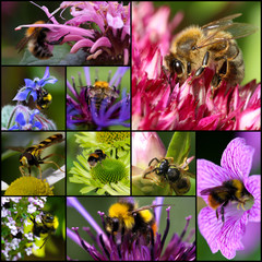 Bumblebee Bee Wasp Pollinating Flowers Set Collage