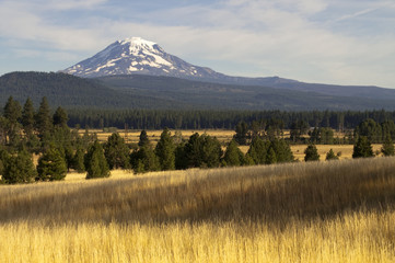 Golden Grassland Countryside Mount Adams Mountain Farmland Lands