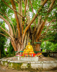 Buddha image sitting under a bodhi tree