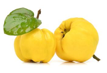 Ripe yellow quinces