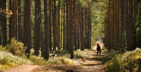 a person walking in the forest