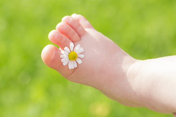 White chamomile is between child leg toes