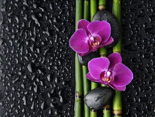 Two red orchid with stones and bamboo grove