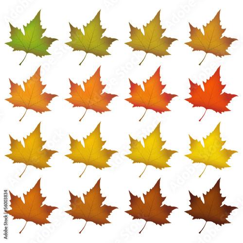 Herbst, Blätter, Herbstblätter, Set, Symbole, Färbung, Icon, 2D ...