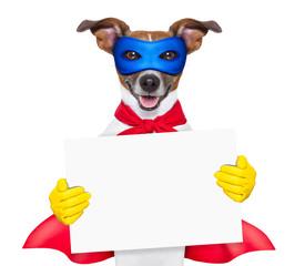 super hero dog