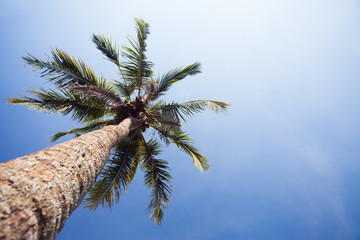 background of palm tree, Bali, Indonesia