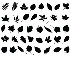 Silhouettes of foliage, vector