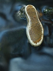 Old shoe sole in blurred clear water of mountain river