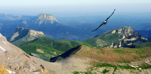 Wall Mural - eagle flying in the Pyrenees