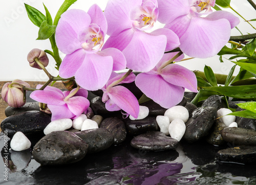 Wellness Konzept Orchideen Steine Wasser Bambus Stock Photo