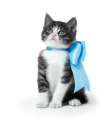 Little kitten with a bow on a white background