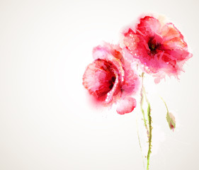 The two flowering red poppies. Greeting-card.