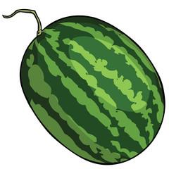 vector cartoon watermelon