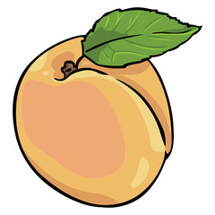 vector cartoon apricot