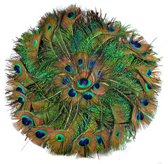 Peacock Feather in circle