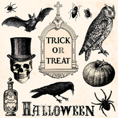 Trick or treat - halloween elements