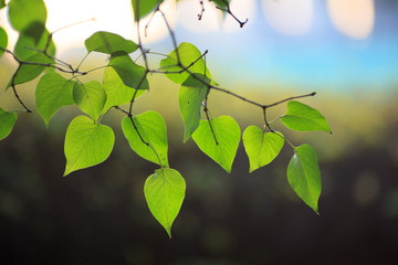 Wall Mural - Green leaves branch