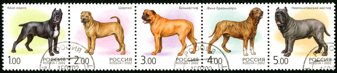 RUSSIA - 2002: shows fauna, dogs
