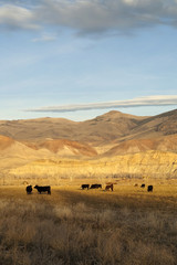 Cattle Grazing Ranch Livestock Farm Animals Western Landscape