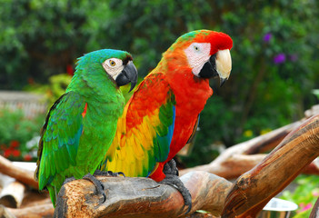 Macaw Birds.