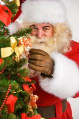 Real Santa Claus decorating Christmas tree