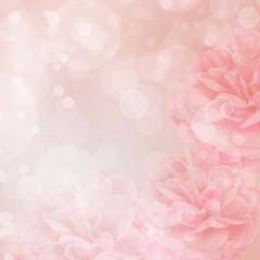 Beautiful pink rose on bokeh background