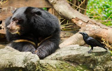 Bear and Crow.