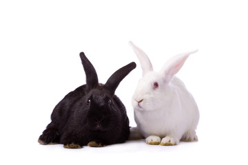 Black rabbit and white rabbit isolated on white background