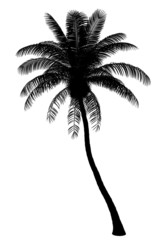 silhouette of coconut palm tree isolated on white background