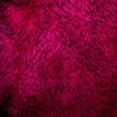 Aluminium Prints Macro photography Purple fur texture