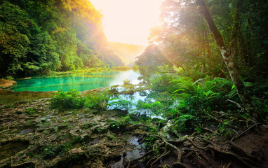 Sunny morning in the mountainous jungle of the national park Sem