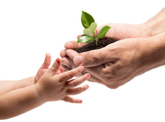Wall Mural - hands of a child taking a plant from the hands of a man