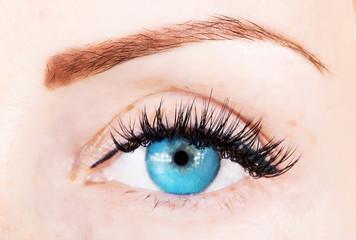 eye with bushy lashes