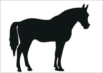 Silhouette of a horse on a white background