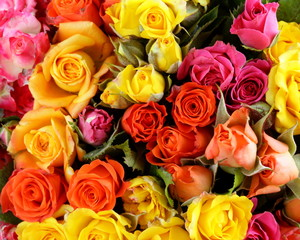different color roses  may be used as the background