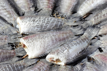 Snakeskin gourami fish drying in the outside