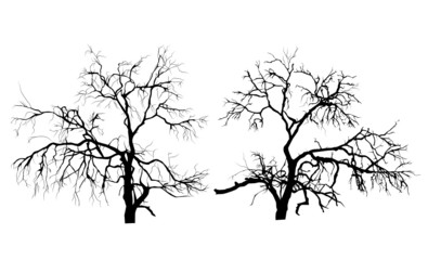 Two dead trees without leaves