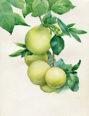 Vector branch with leaves and apples