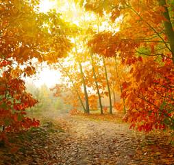 Foto op Canvas Landschappen Autumn park