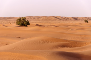 Morocco, Dunes with trees