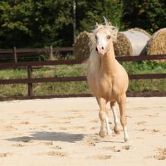 Wall Mural - Gorgeous palomino stallion running