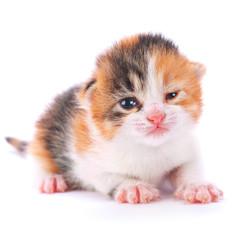 Great kitten