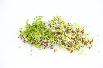 Sprouts of lentil and broccoli on the white background