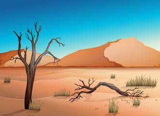 Ecosystem Desert