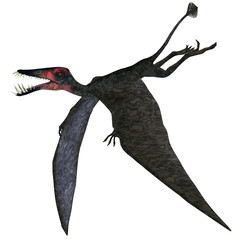 Dorygnathus Pterosaur on White