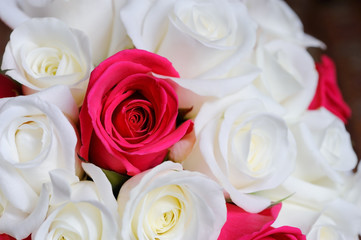 Bride roses closeup
