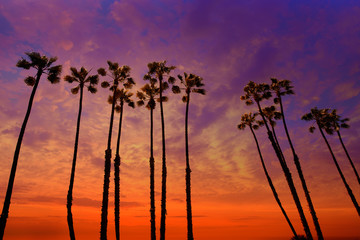 Wall Mural - California palm trees sunset with colorful sky