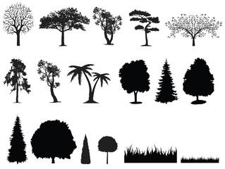 Fototapeta trees obraz