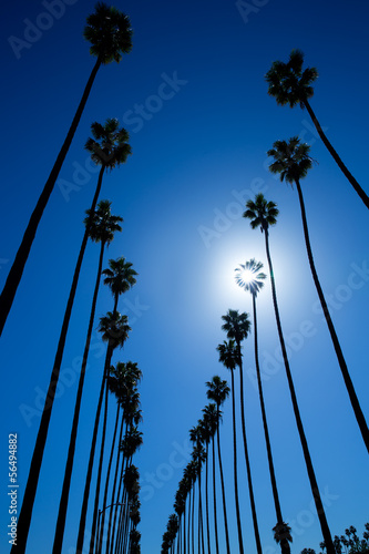 Wall mural LA Los Angeles palm trees in a row typical California